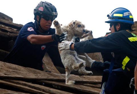 Risultati immagini per animali terremotati nelle marche