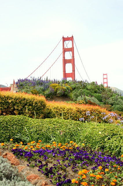 Flowers and Bridge