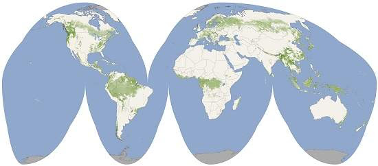Mapa-múndi verde mostra altura das florestas da Terra