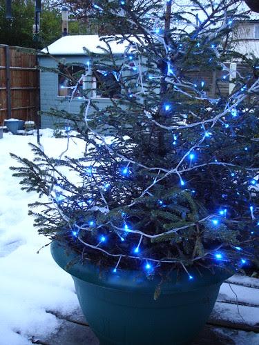 Oh Christmas tree 003