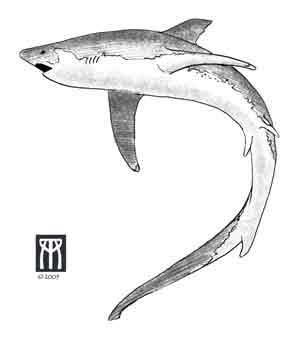 Black And White Shark Tattoo Designs