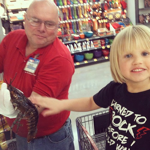 Petting the Lobsters @ HEB by seanclaes