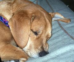 SleepySophie
