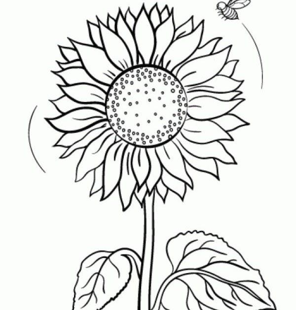 mewarnai gambar bunga di buku gambar