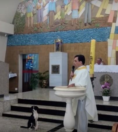 Un perrito asiste a misa todos los días–Llega la hora del sermón y conmueve a todos con su gesto