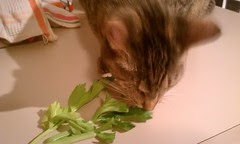 Maggie trying a bit of celery
