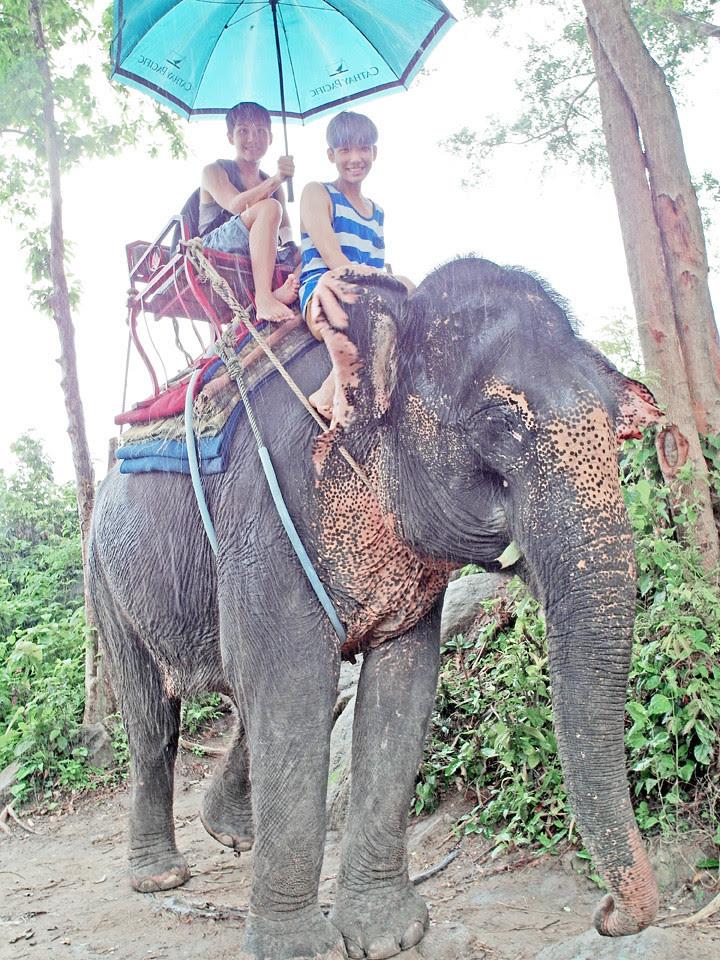 phuket elephant riding typicalben 9