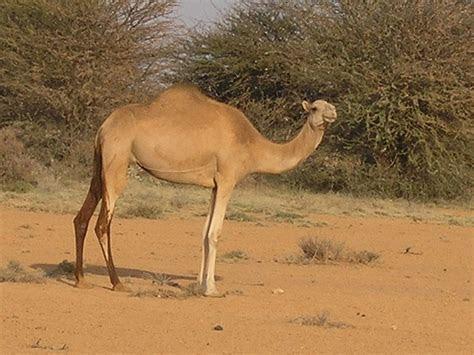 SOMALIA 233
