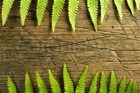 Fresh fern border on vintage wooden background with copy
