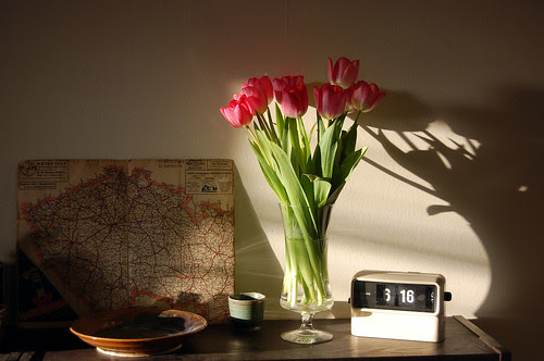 tulips, map