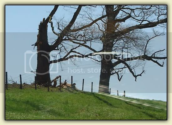 Kaboom Tree 2009
