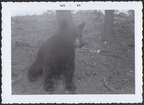 Yellowstone1956_Bear