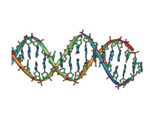 """DNA """" Double Helix"""""""