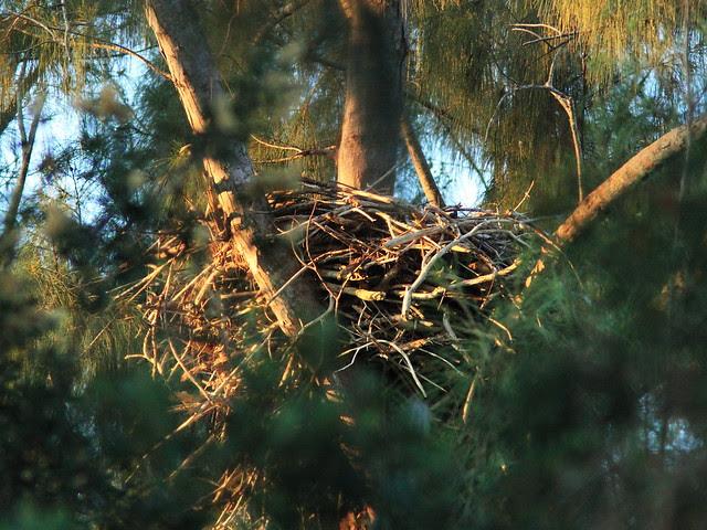 Eagle Nest 20131021