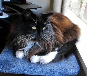 cat-blobby