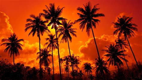 palm trees orange sky hd wallpaper  wallpapers