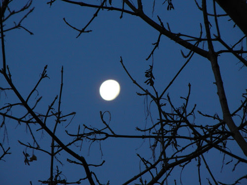 Early Morning Moon _ 9094