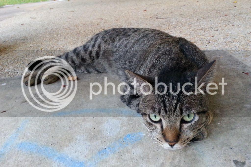 photo CatJRT17May03.jpg