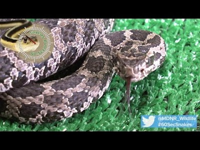Michigan DNR: Scared of snakes? No need to be