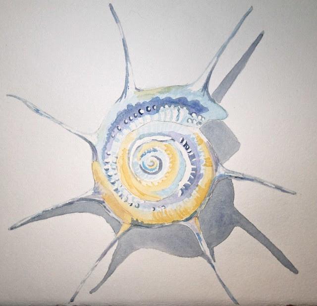 watercolour shell