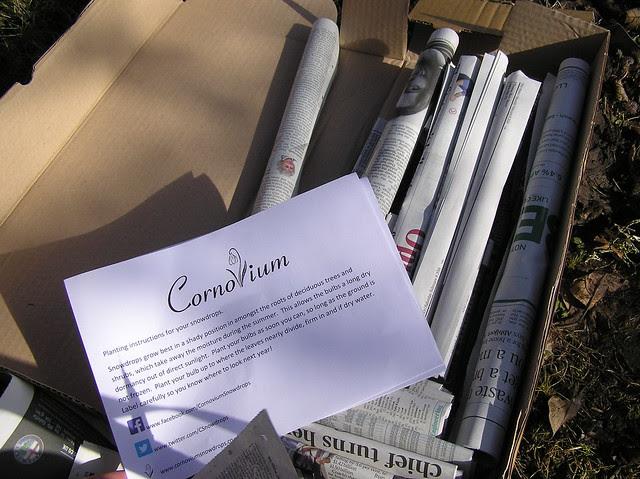 Galanthus pack