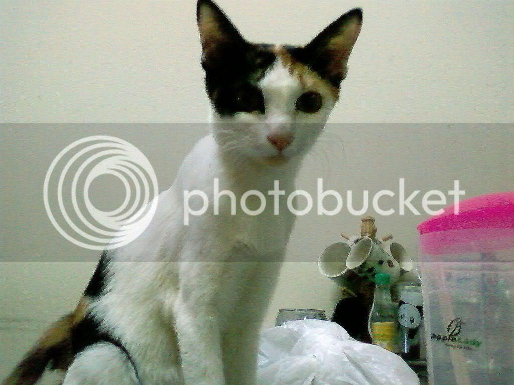 Download 93+  Gambar Kucing Lg Sedih Terlihat Keren Gratis