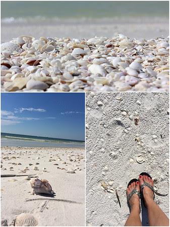 Shells - Keewaydin Island, Florida