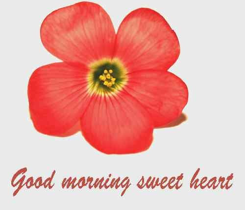 38 Good Morning Hd Flower Images For Free Photo Download For