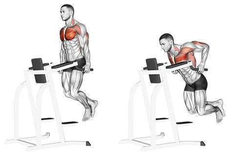 exercise  chest chest dips jase stuart