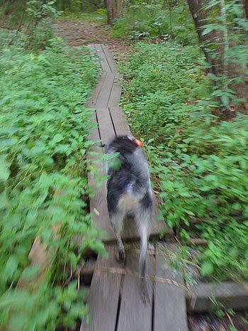 blurry norwood