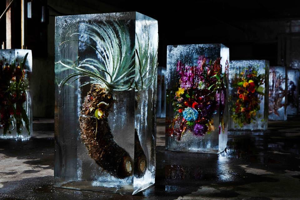 iced-flowers-makoto-azuma (5)