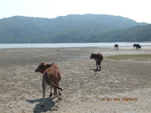 一人一信:要求立即送回大嶼山被遷移的牛隻
