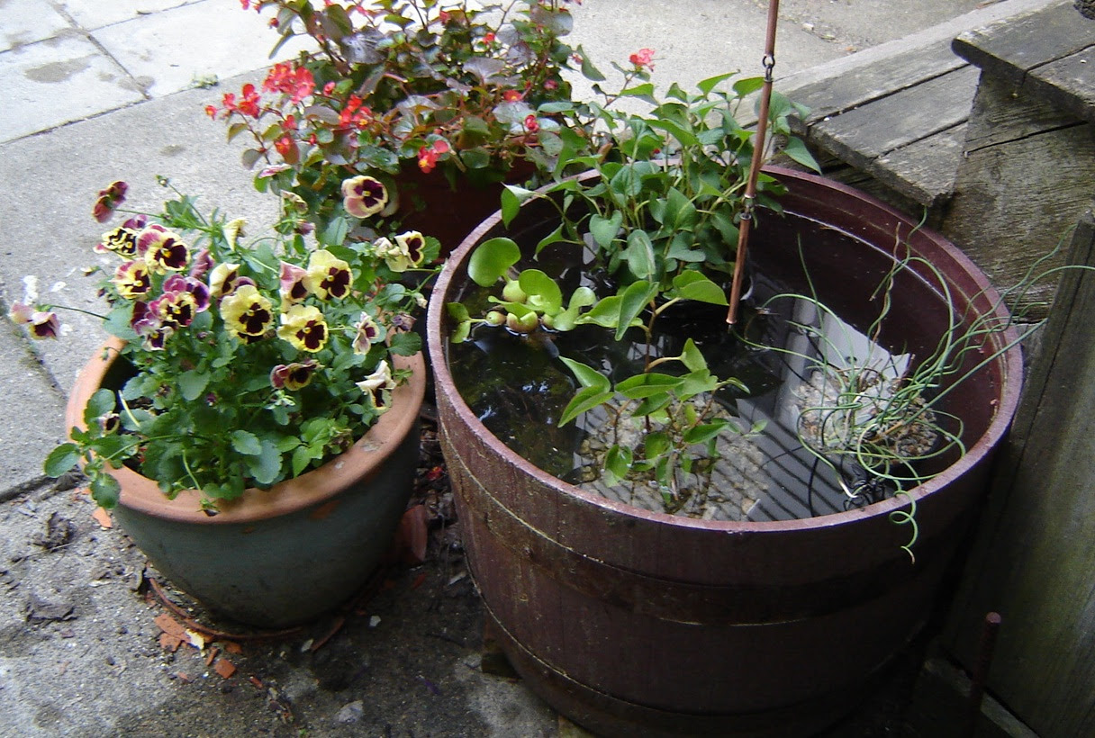 Excellent Barrel Water Garden 1216 x 820 · 423 kB · jpeg