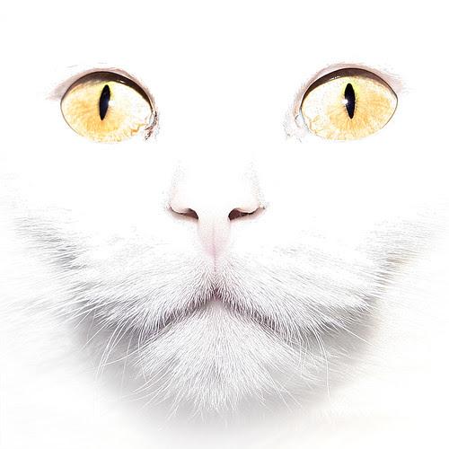 Cold stare por Villi.Ingi