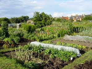 a view of allotments