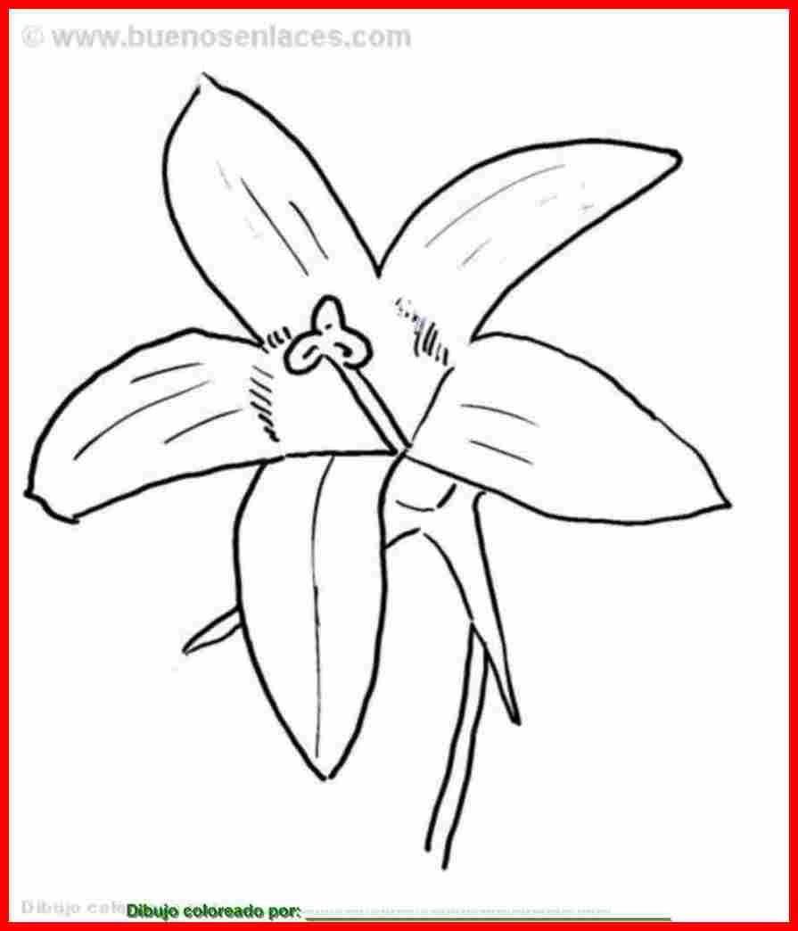 Dibujo De Flor Para Colorear E Imprimir