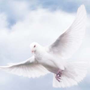 In Loving Memory Of Mary Helen Galasso Krtn Enchanted Air Radio