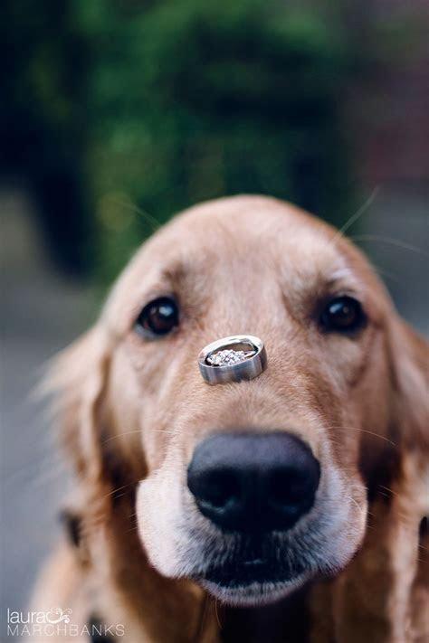 Best 25  Dog ring bearers ideas on Pinterest