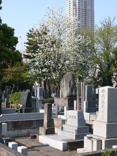 Aoyama cemetery 12