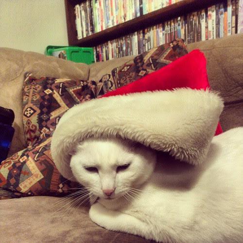 Christmas kitty:)