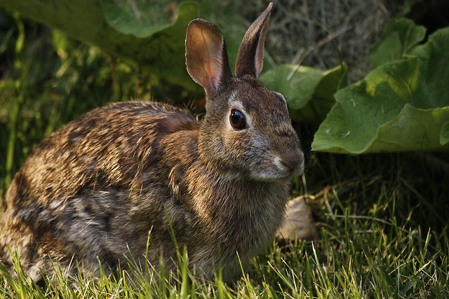 5th bunny