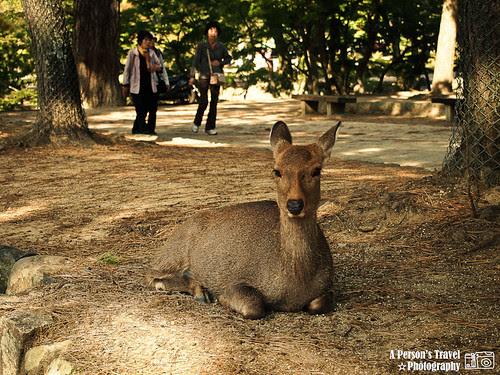2011Kyoto_Japan_ChapFourteen_9