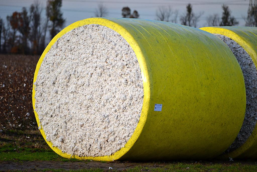 http://www.capecentralhigh.com/wp-content/uploads/2013/11/Cotton-bale-11-23-2013_6504.jpg
