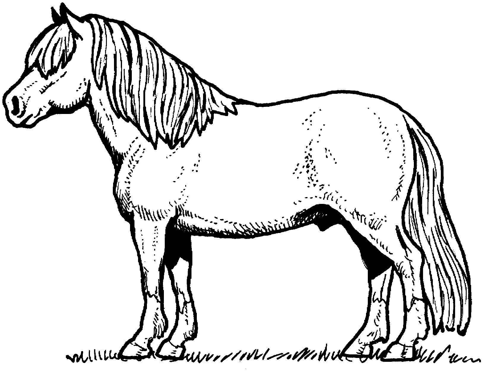 Free Printable Horse Coloring Pages For Kids Afvere
