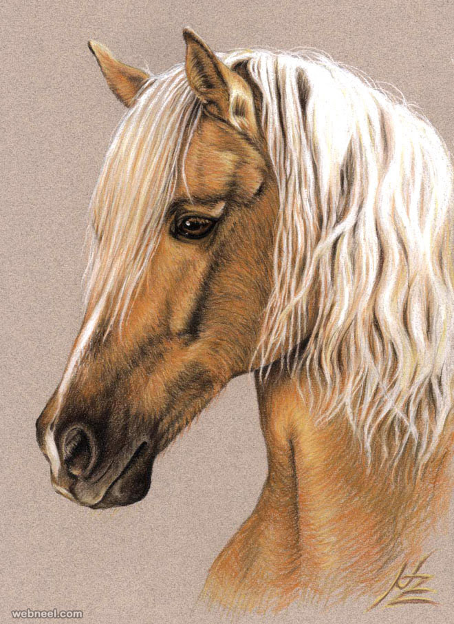 25 Beautiful Animal Drawings for your inspiration - How to ...