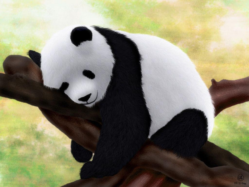 Baby Panda Wallpapers  Wallpaper Cave