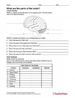 35 Label The Brain Worksheet Answers - Labels Database 2020