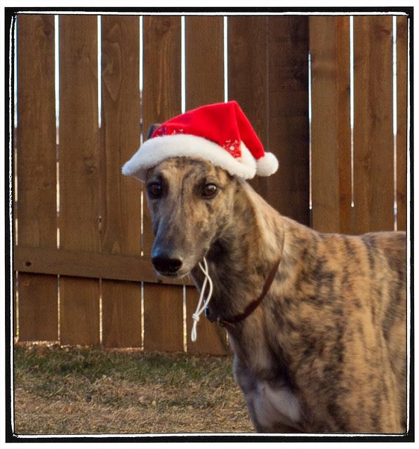 squash santa hat