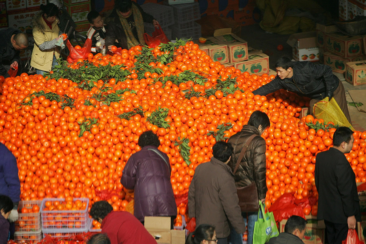 People shop for mandarins at a market in Xi'an. Mandarins with their leaves still attached are believed to bring happiness for the New Year - as long as they are displayed in the home in even numbers (uneven numbers bring bad luck)