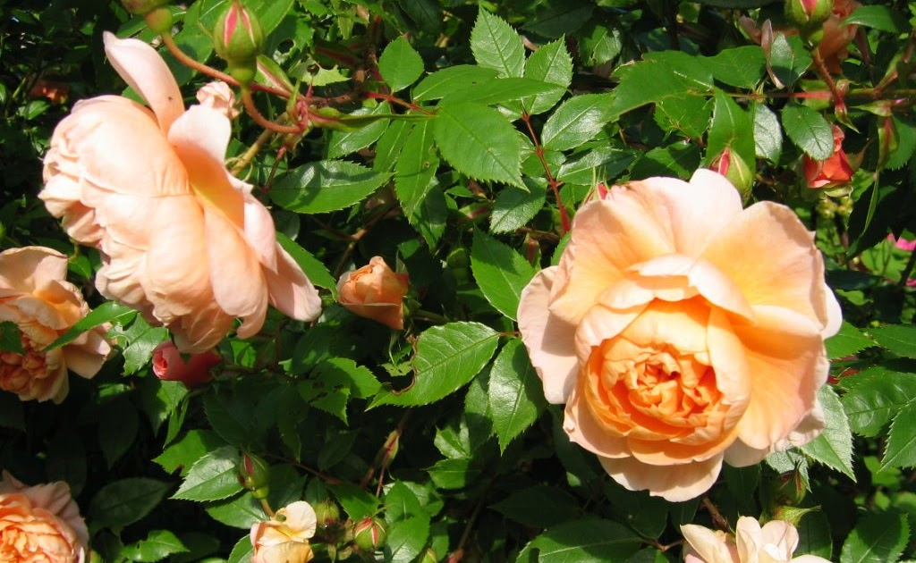Jardin de marguerite l 39 apr s floraison after flowering - Tailler orchidee apres floraison ...